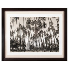 Photograph, Artist Proof California Palm Trees, Signed Limited Edition