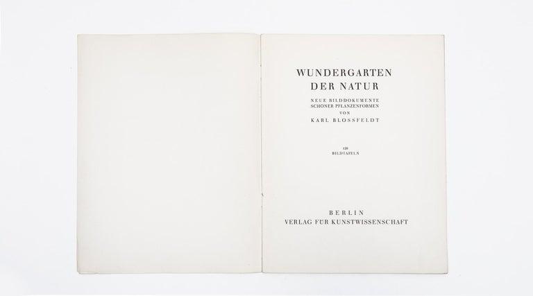 German Photogravure in Black and White by Karl Blossfeldt '2' For Sale