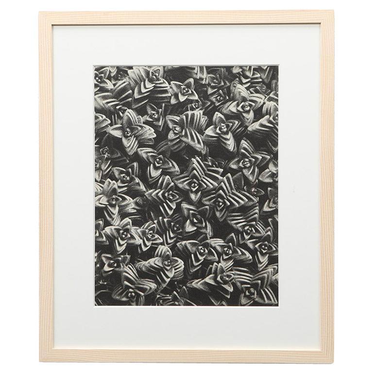 Photogravure in Black and White by Karl Blossfeldt '5'