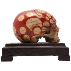 Phrenological Skull According to the Theory of Franz Joseph Gall, 1758-1828