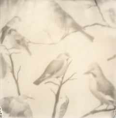 Bird Print - Still Life Black and White Film Photographic Print Framed