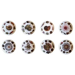 Piero Fornasetti Diner Plates Decorated with Sea Anemones, Urchins & Sea Shells