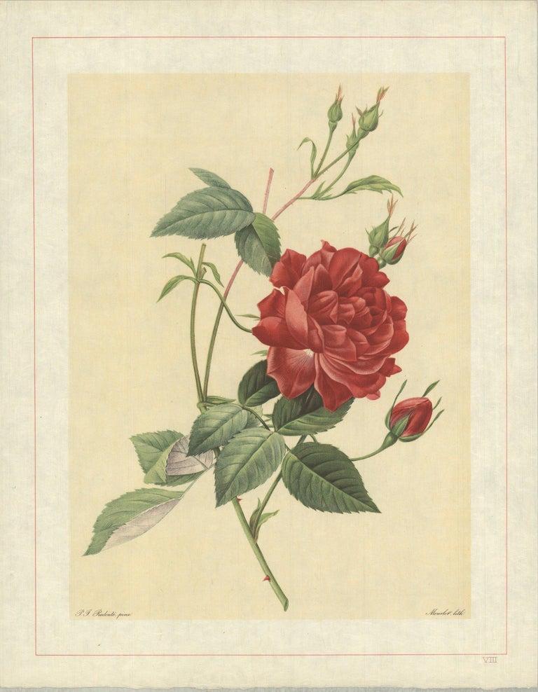 1938 Pierre-Joseph Redoute 'Rosa Indica Cruenta; Rosier mensuel 'Slater's  - Print by Pierre-Joseph Redouté