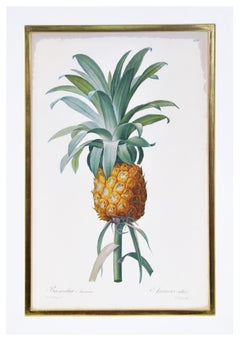 Redoute, Set of Three Bromelia (Pineapples)