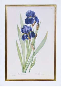 Redoute, Set of Twelve Irises, stipple-engraved finished by hand.