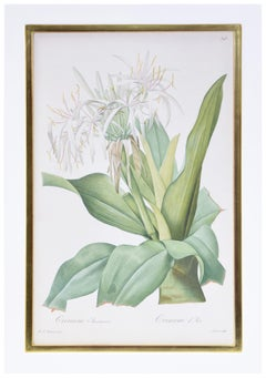 Pierre-Joseph Redouté , Six White Lillies