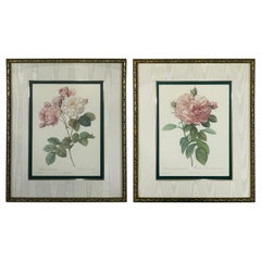 Pierre Redoute Botanical Lithograph Print, a Bombay & Co collection, a Pair
