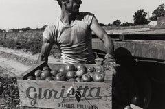 Man Lifting Box of Tomatoes