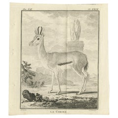 Pl. 29 Antique Print of an Antelope Species by Buffon, 1769