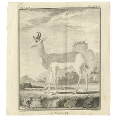 Pl. 36 Antique Print of an Antelope Species by Buffon, 1769