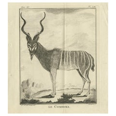 Pl. 53 Antique Print of an Antelope Species by Buffon 'circa 1770'