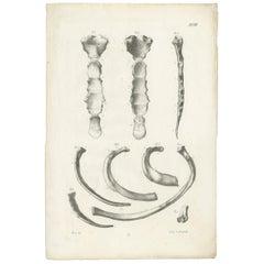 Pl. LVIII Antique Anatomy / Medical Print of Various Bones by Cloquet, 1821