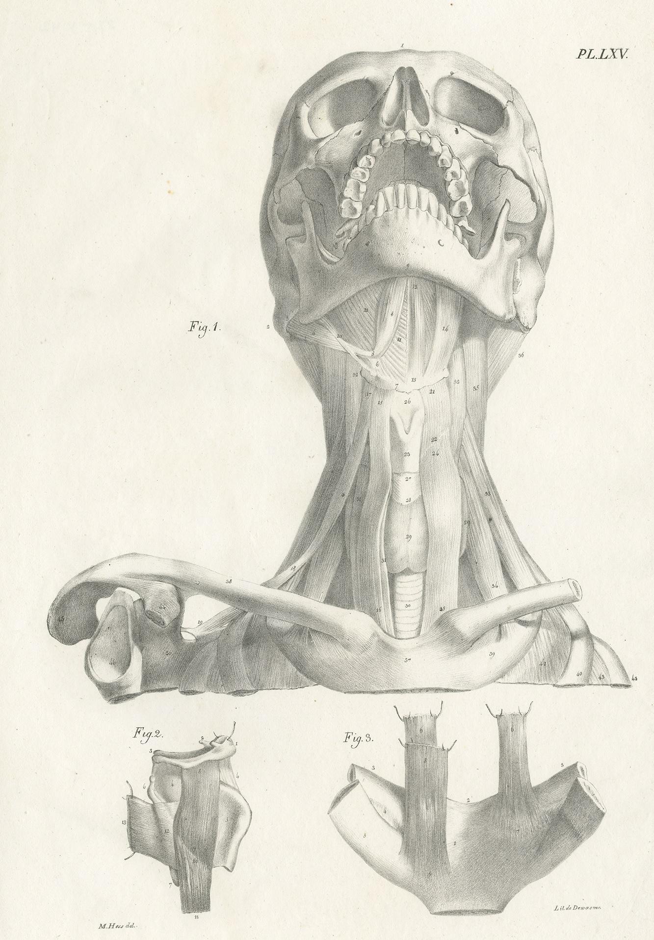 Orthognathic Anatomy Watercolor Print Teeth Anatomy Art Medical Cabinet Office