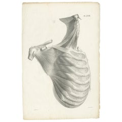 Pl. LXVIII Antique Anatomy / Medical Print of the Rib Cage by Cloquet, '1821'