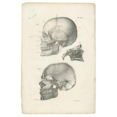 Pl. XXVI Antique Anatomy / Medical Print of the Skull by Cloquet, '1821'