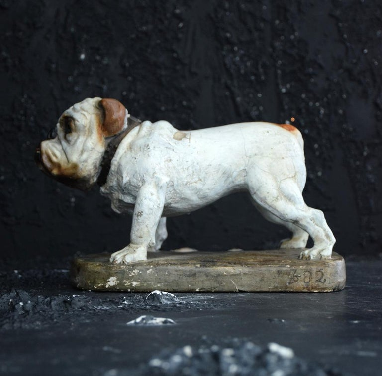 Early 20th Century Plaster English Bull Dog Statue For Sale