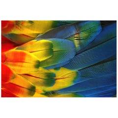 Plumas Colores - Guacamaya