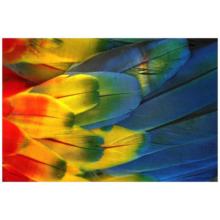 Plumas Colores - Guacamaya For Sale