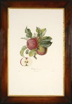 POITEAU/TURPIN. Traité des arbres fruitiers: A Set of Four Apples