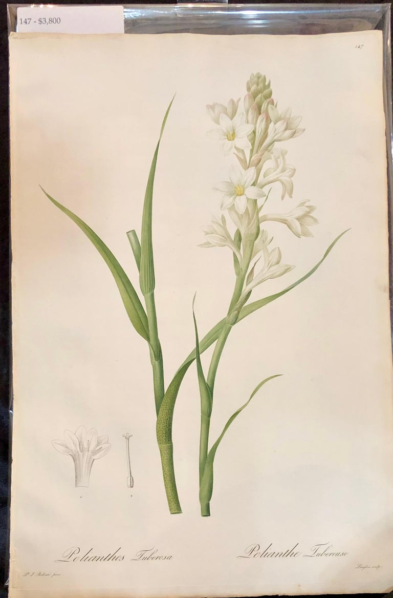 Minimalist Polianthes Tuberosa Hand Colored Engraving Signed P.J. Redoute For Sale