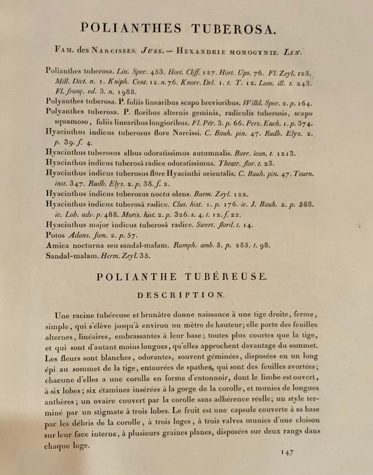 French Polianthes Tuberosa Hand Colored Engraving Signed P.J. Redoute For Sale