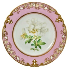 Porcelain Plate, Samuel Alcock, Pink with White Azalea, circa 1852 '2'