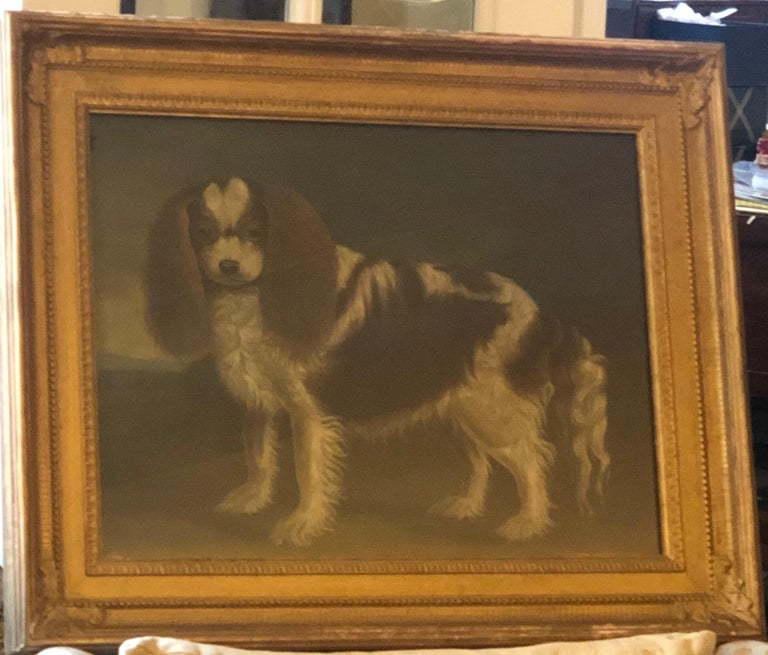 Portrait of a Cavalier King Charles Spaniel, oil on canvas, 20th Century  For Sale 1