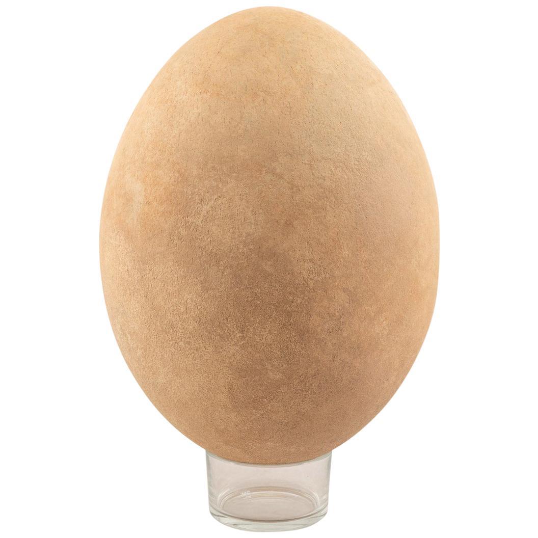 Pre-17th Century Extremely Rare & Complete Elephant Bird Egg, Madagascar