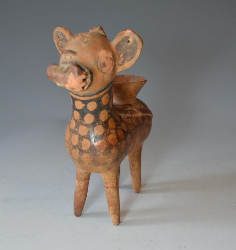 Pre Columbian art A charming and very rare Recuay small spotted deer vessel, a very finely made vessel of a deer like creature with long tale and exaggerated teeth hold and curved object in its mouth. Pre-Columbian, northern highlands Peru, Recuay