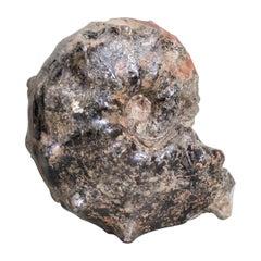 Prehistoric Ammonite Fossil or Natural Specimen