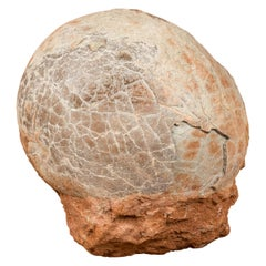 Prehistoric Chinese Petrified Dinosaur Egg with Cracked Surface