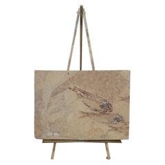 Prehistoric Eocene Age Fish Fossil Plaque Farson Wyoming Paleoichthyology