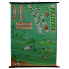 Pull-Down Wall Chart Quentell Freshwater Algae Plants Maritime Decoration