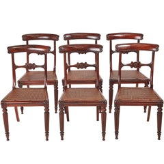 Quality Set of Six William IV Rosewood Dining Chairs