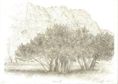 1982 Raffi Kaiser 'Land of the Trees near Rock Mountain' Black & White,Brown