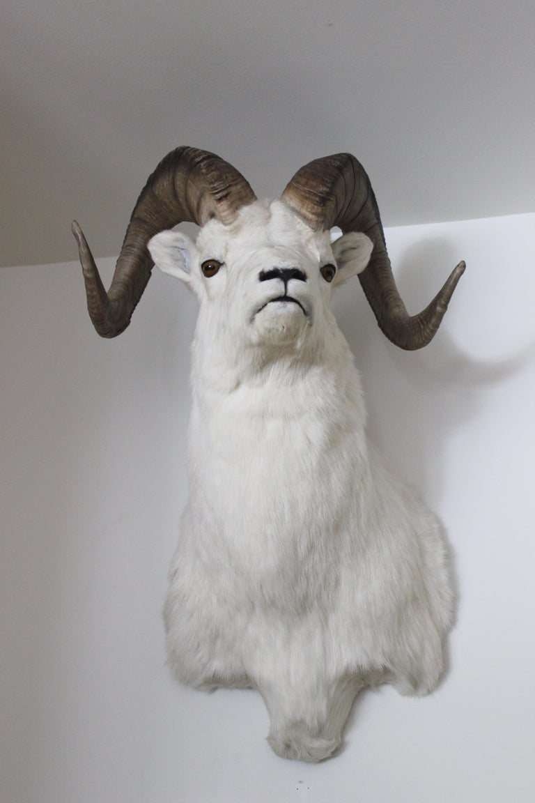 Ram Taxidermy Wall Mount In Excellent Condition For Sale In East Hampton, NY