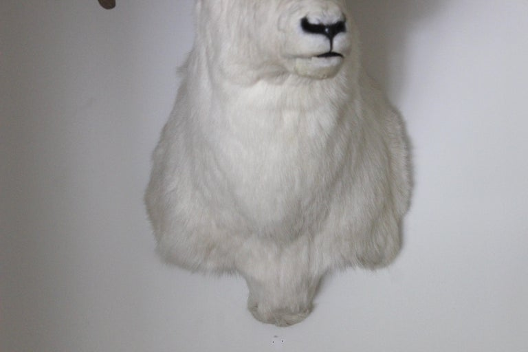 Ram Taxidermy Wall Mount For Sale 2