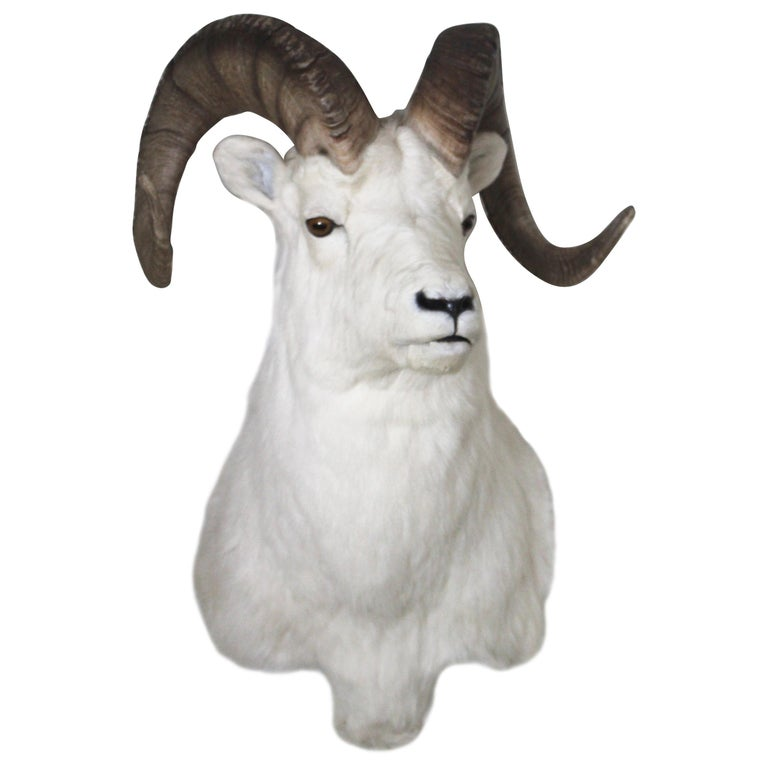 Ram Taxidermy Wall Mount For Sale