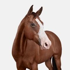 American Quarter Horse No 1