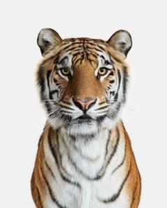 Bengal Tiger No. 1