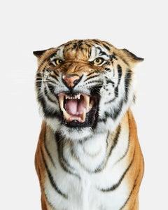 Bengal Tiger No. 2