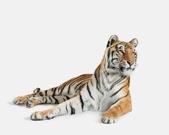 Bengal Tiger No. 3