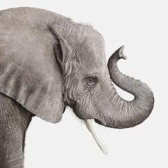 Elephant No. 2