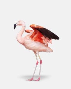 Flamingo No. 3