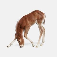 Foal No. 2