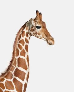Giraffe No. 1