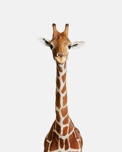 Giraffe No. 2