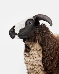 Jacob Sheep No. 1
