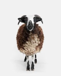 Jacob Sheep No. 2