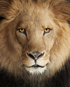 Lion No. 1